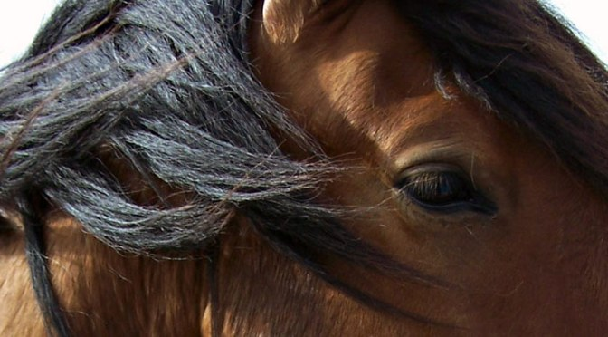 wild horses slaughter