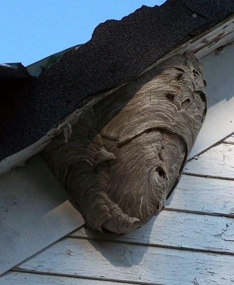 hornet-nest-2